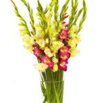 Miflora: Strauß Sophie mit bunten Gladiolen für 12,90€ inkl. Versand