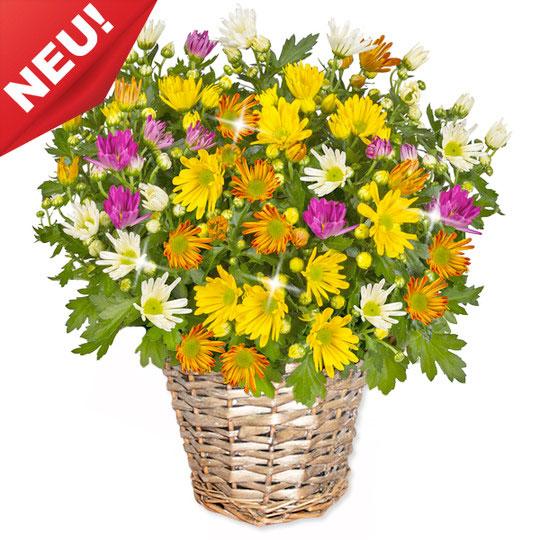 crysanthemen