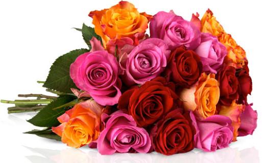 miflora rosen günstig angebot deal rallye aktion