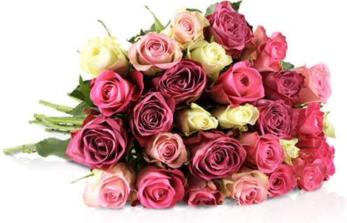 Rosen günstig kaufen beim Online-Blumenhändler