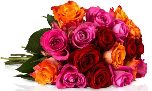 Rosen Rallye Miflora Blumenstrauß angebot Deal