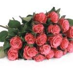 Miflora: 20 pinke Rosen für 18,90€ inkl. Versand