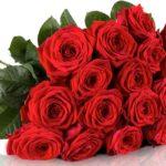Miflora: 20 Red Naomi Rosen für 19,90€ inkl. Versand